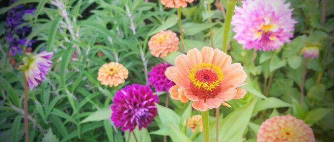 Beautiful flower at Chicago Botanic Garden